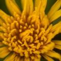 flores_17