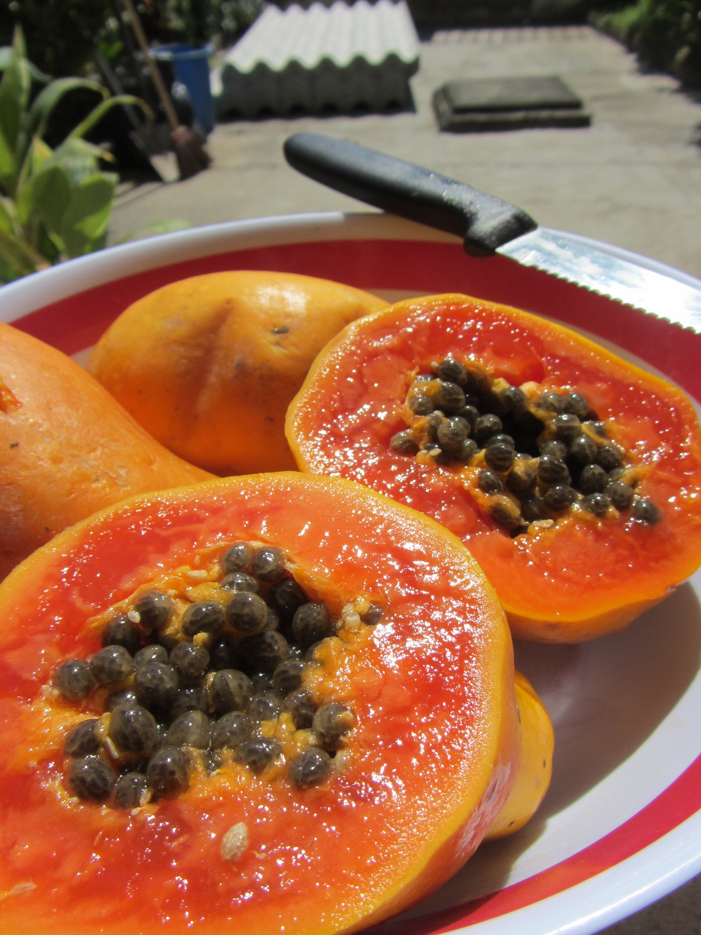Benefits-and-harms-of-papaya