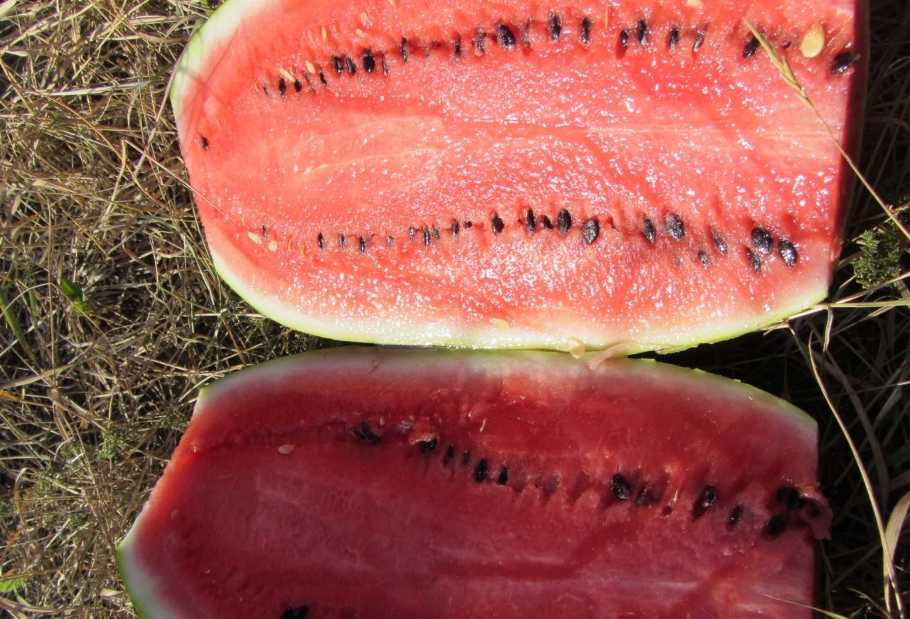 Qual o benefício do suco de melancia, Benefícios da casca da melancia, Propriedades medicinais da melancia