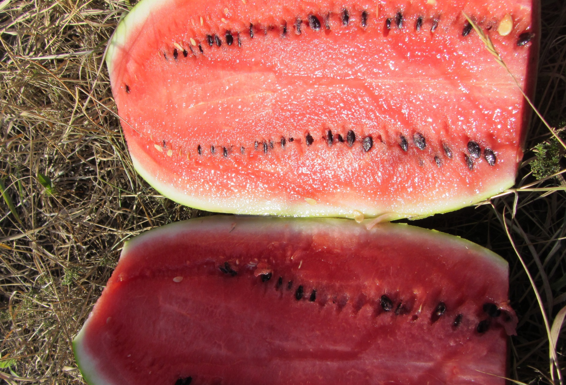 The-benefits-of-watermelon