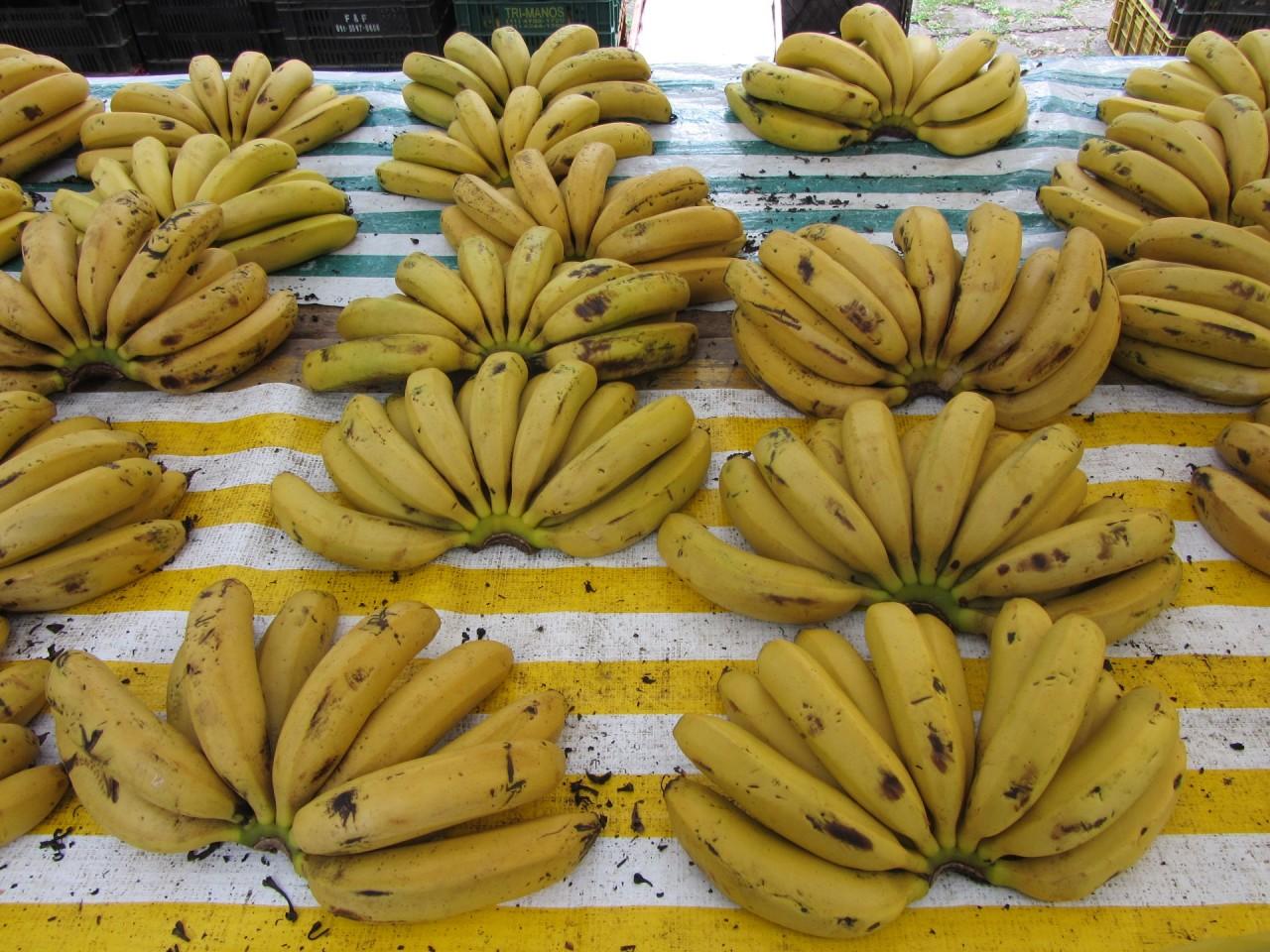 Benefícios da banana para as mulheres, Composição química da banana, Banana nanica benefícios e malefícios