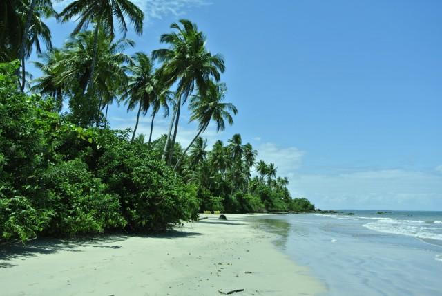 Mata selvagem Ilha de Boipeba