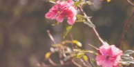 jardim5