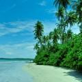 Mata fechada no Norte da Ilha de Boipeba
