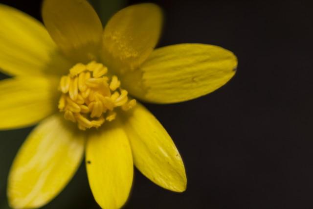 flores_21