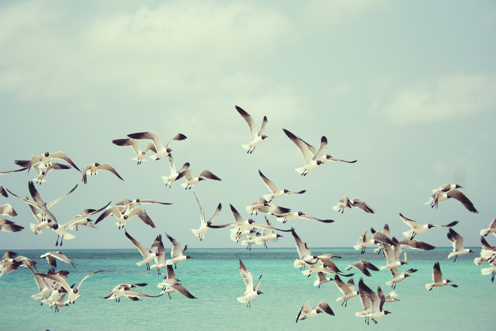summer-seagulls-flying-1345049-1920x1280