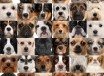 Small-breed-dogs-for-apartment-1280x1280