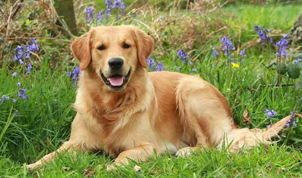 Escolhendo a melhor raça para uma criança, O tamanho do cão adequado para cada criança, Raças recomendadas para crianças