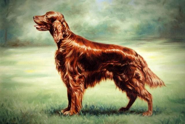Caráter do labrador retriever, Uma criança pode cuidar de um labrador, O que mais você precisa saber sobre os Labradores